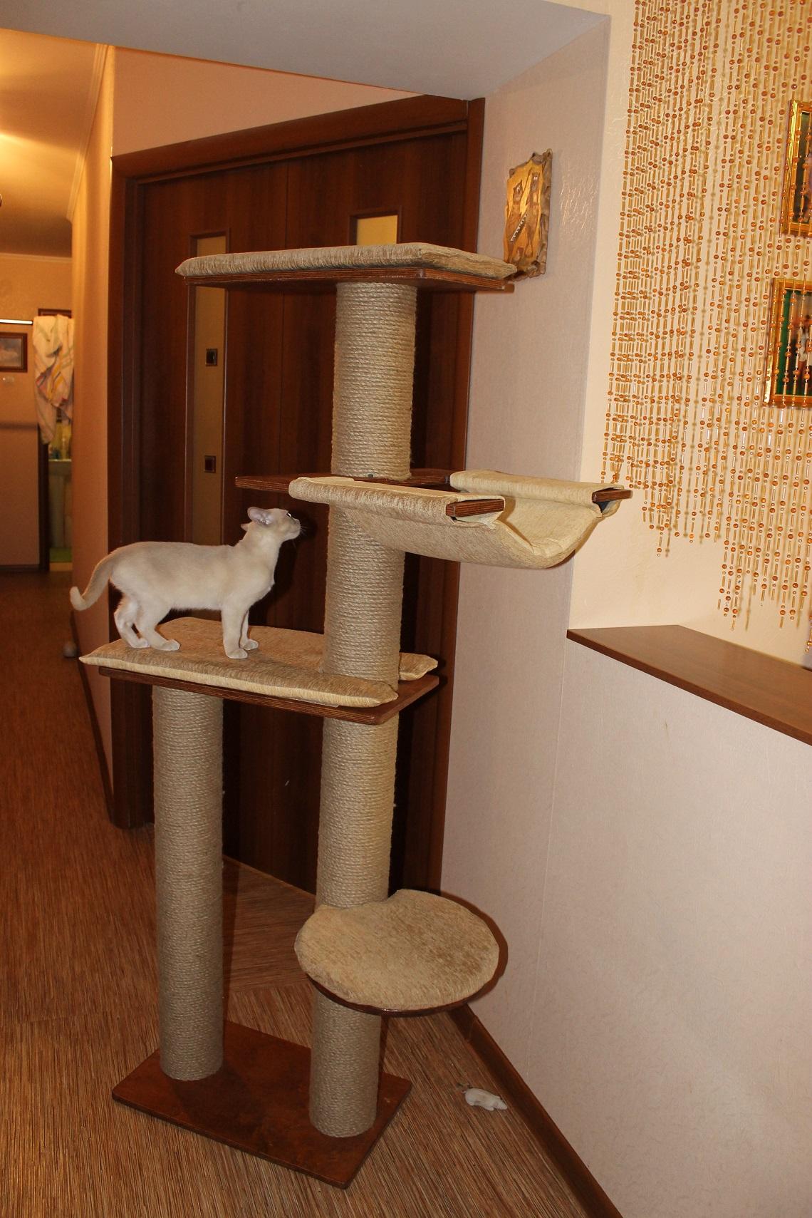 Домик для двух кошек своими руками мастер класс